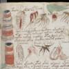Una intel·ligència artificial desxifra el Còdex Voynich, el llibre més misteriós del món